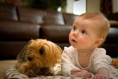 perro y bebé en el suelo