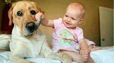 bebé jugando con perro