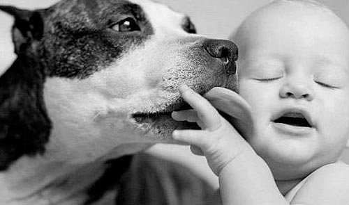 perro-besando