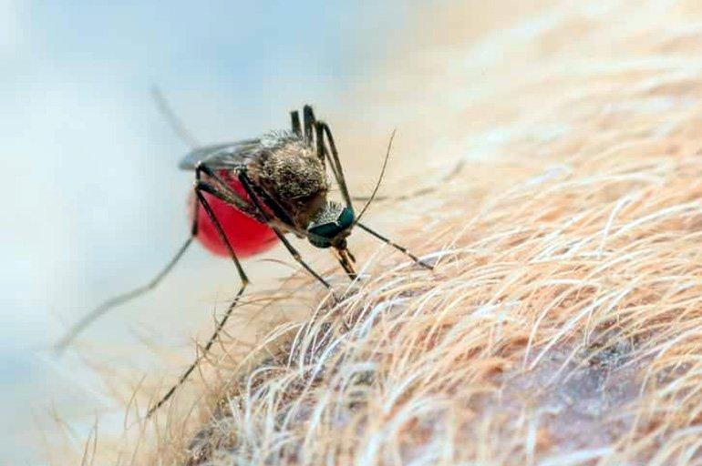 mosquito-picando-a-perro