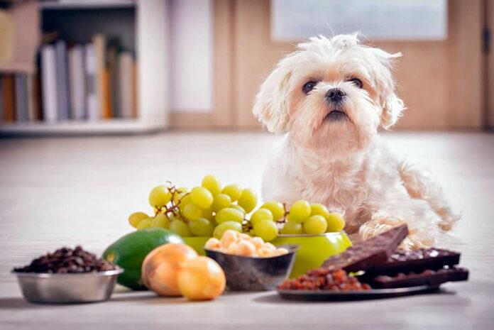 alimentos-tóxicos-para-los-perros
