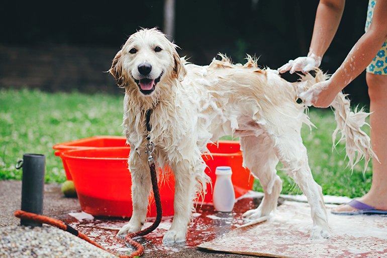bañando-al-perro-en-el-jardín