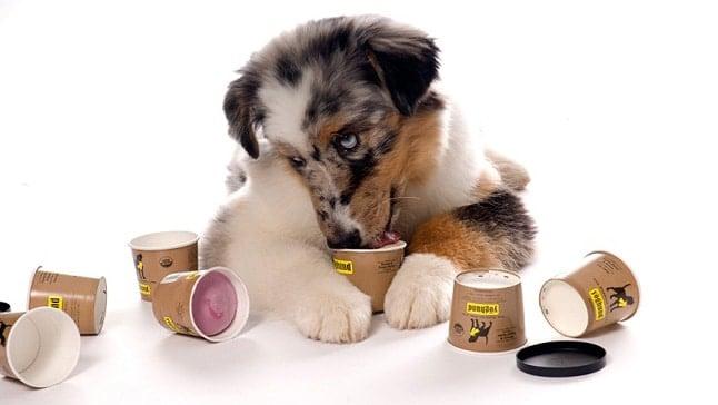 perro comiendo yogur