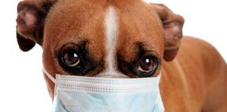 perro-con-alergia