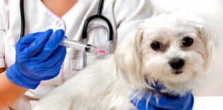 perro podiendose vacuna