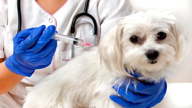 Resultado de imagen para vacunas para perros