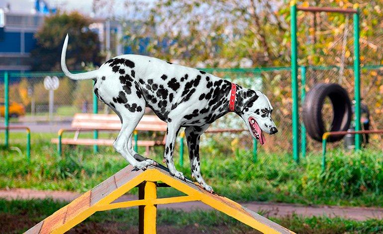 perro-en-una-sesión-de-entrenamiento