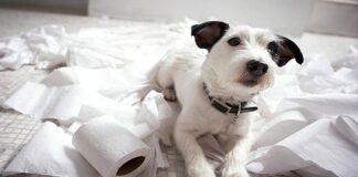perro con ansiedad por rseparación