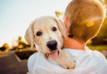 cachorro-de-perro en-brazos-de-su-humano
