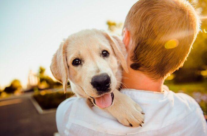 chiot-chien-dans-bras-de-son-humain