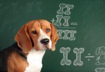 perro en clase