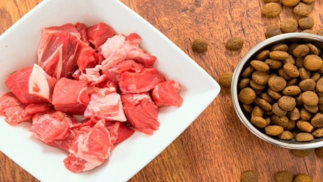 carne para perros
