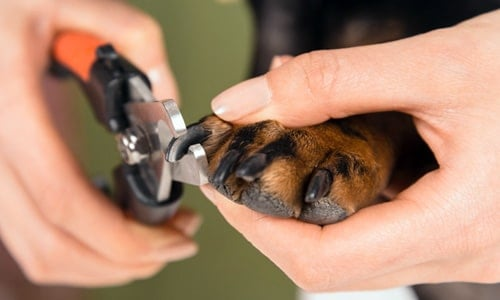cortando uñas a un perro