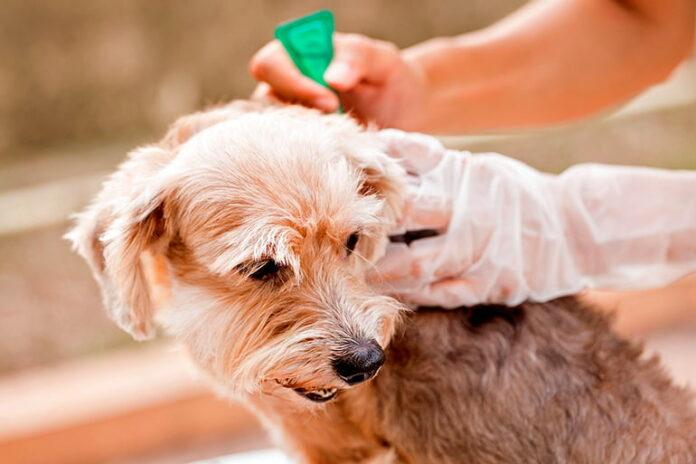 liquido-antipulgas-para-perros