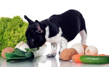 perro con comida