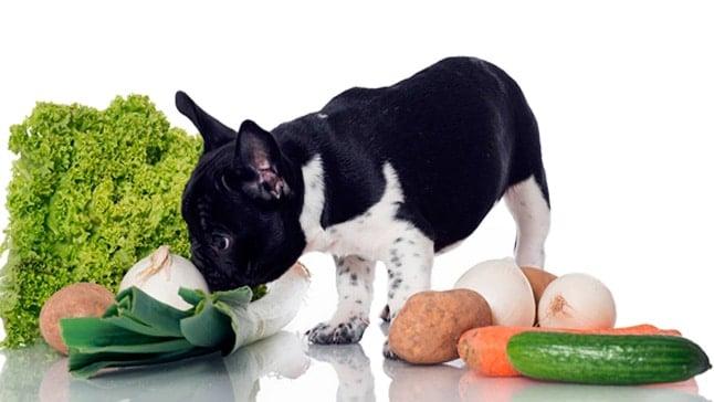 chien avec de la nourriture