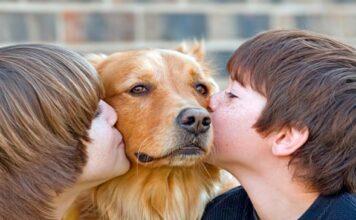 perro con niños