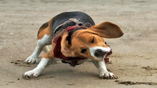 perro sacudiendose