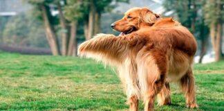 perro moviendo la cola