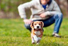 entrenar perro