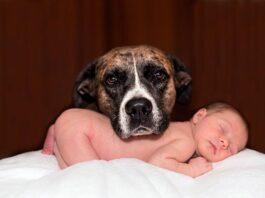 perro-junto-a-bebé-humano