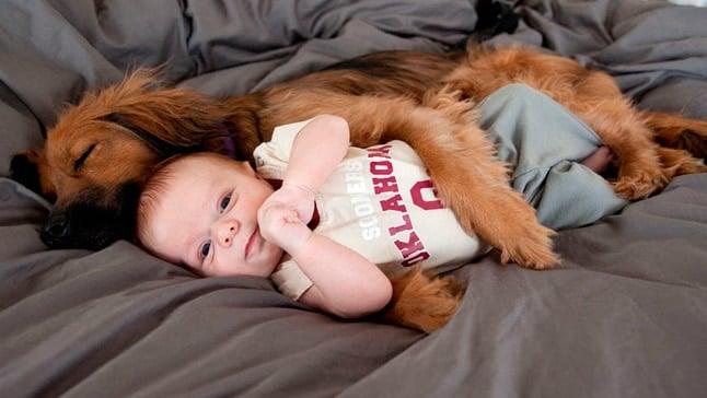 perro y bebe