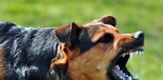 perro de raza peligrosa