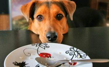 perro mendiga comida