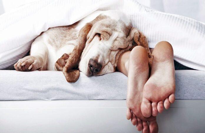 dormir-con-mi-perro