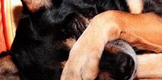 pedo de perro