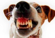 perro enseñando dientes