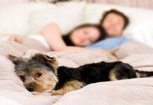 perro en cama