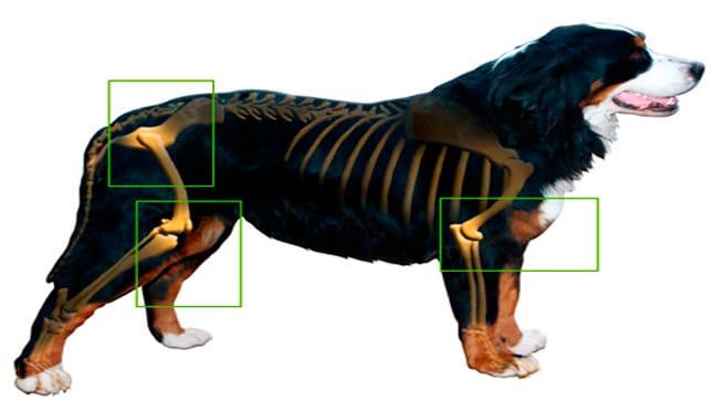 Resultado de imagen de artrosis canina