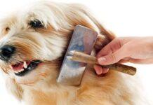 cepillar a un perro