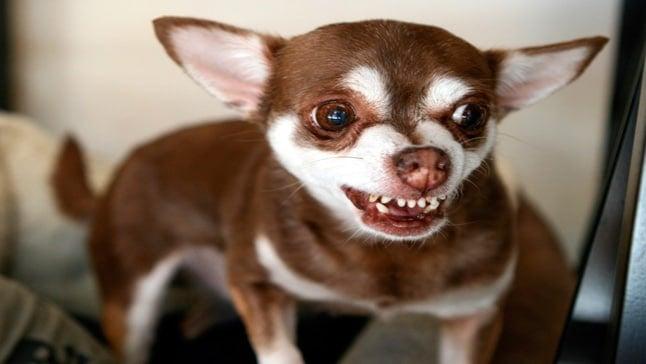 5 Consejos Para Evitar Que Tu Perro Sea Agresivo