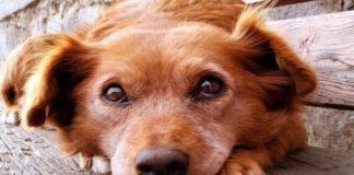 perro amor
