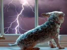 perro y tormenta