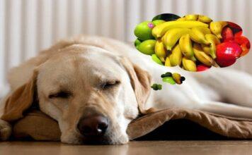 perro y vitaminas