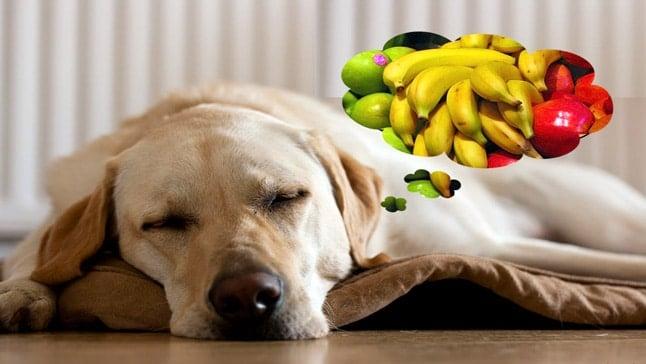 chien et vitamines