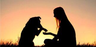 dominar a perro