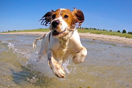 perro bañandose en la playa