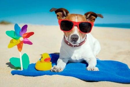 perro tomando el sol en la playa