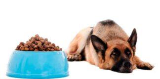 perro no come
