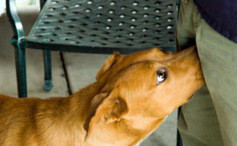 perro oliendo genitales humanos
