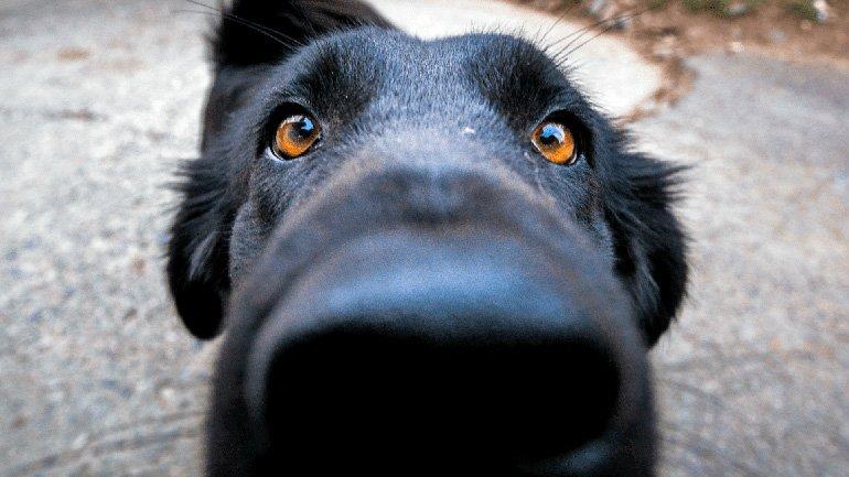 perro olfateando una entrepierna