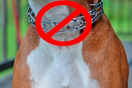 perro con collar inadecuado