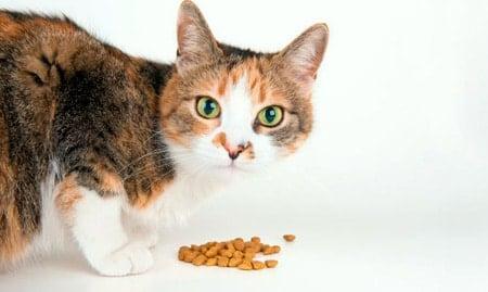 alergia alimentaria en gatos