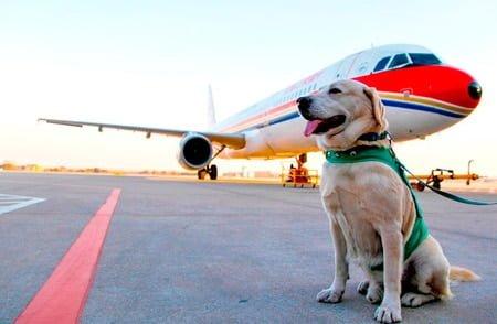 perro viajando en avión