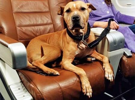 perro sentado en avión