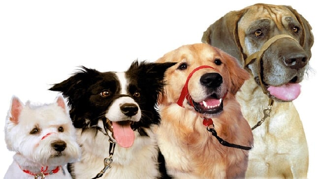 ac389310aa90 Tipos de arneses y collares para perros